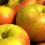 Indian Orchards Apples Media PA