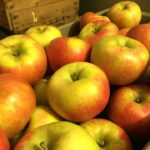 indian orchards apples pick your own fruit
