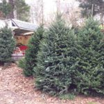 Indian Orchards Farms Christmas trees and Pumpkins