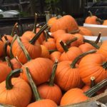 Indian orchards Pumpkins Media PA